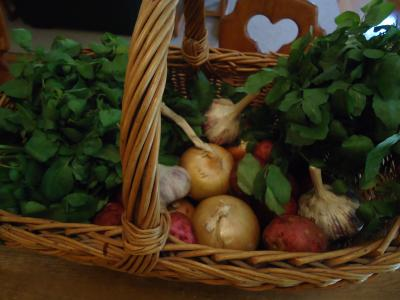 Watercress soup ingredients in a basket, watercress, onions, garlic & potatoes.